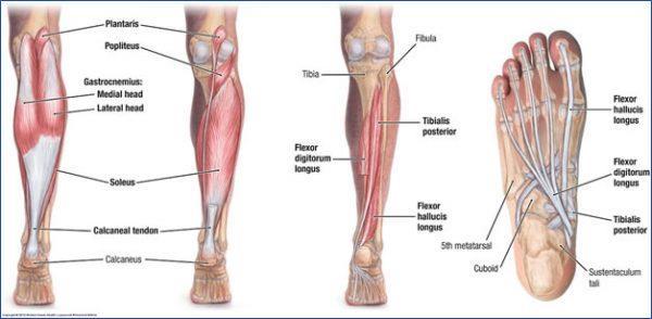 tập bắp chân to